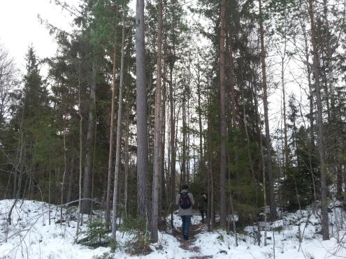 forest-walk5